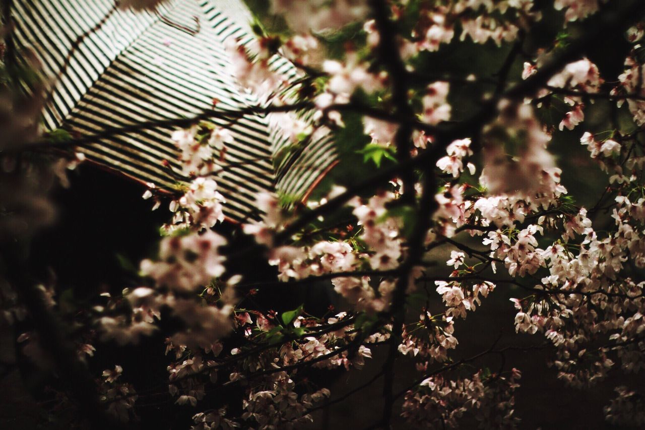 Light And Shadow Cherry Blossoms Rain Unbrella