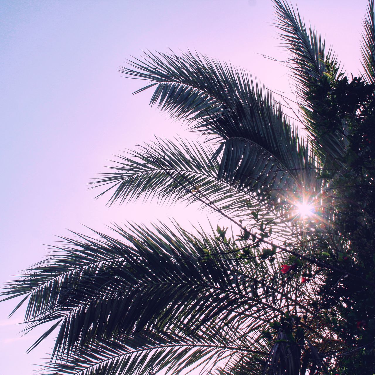 Popular Photos Popular Life EyeEm Palestine Follow Fresh On Eyeem  Nature_collection Eyeem Collection Landscspe Sunrise Sunset Follow #f4f #followme #TagsForLikes #TFLers #followforfollow #follow4follow #teamfollowback #followher #followbackteam #followh Sunshine Like Followme Nature Photography