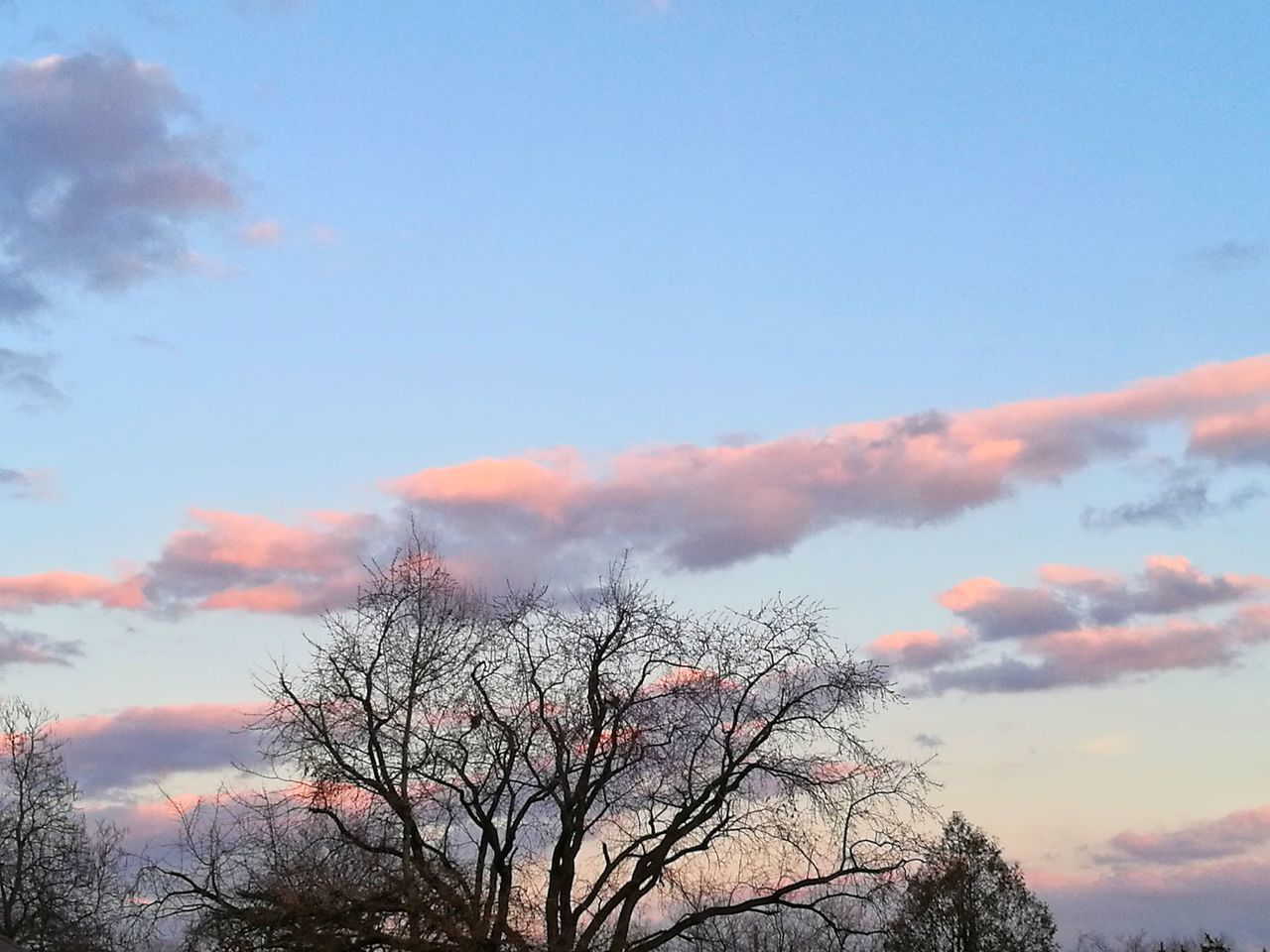 Sky Tree Beauty In Nature Nature Cloud - Sky Outdoors Low Angle View Tranquility No People Sunset Scenics Growth Landscape Day