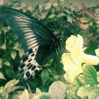 @ sdmimdNature Nammamysooru Mysorediaries Mysurumemes Mysore Butterfly Flowers Beautiful