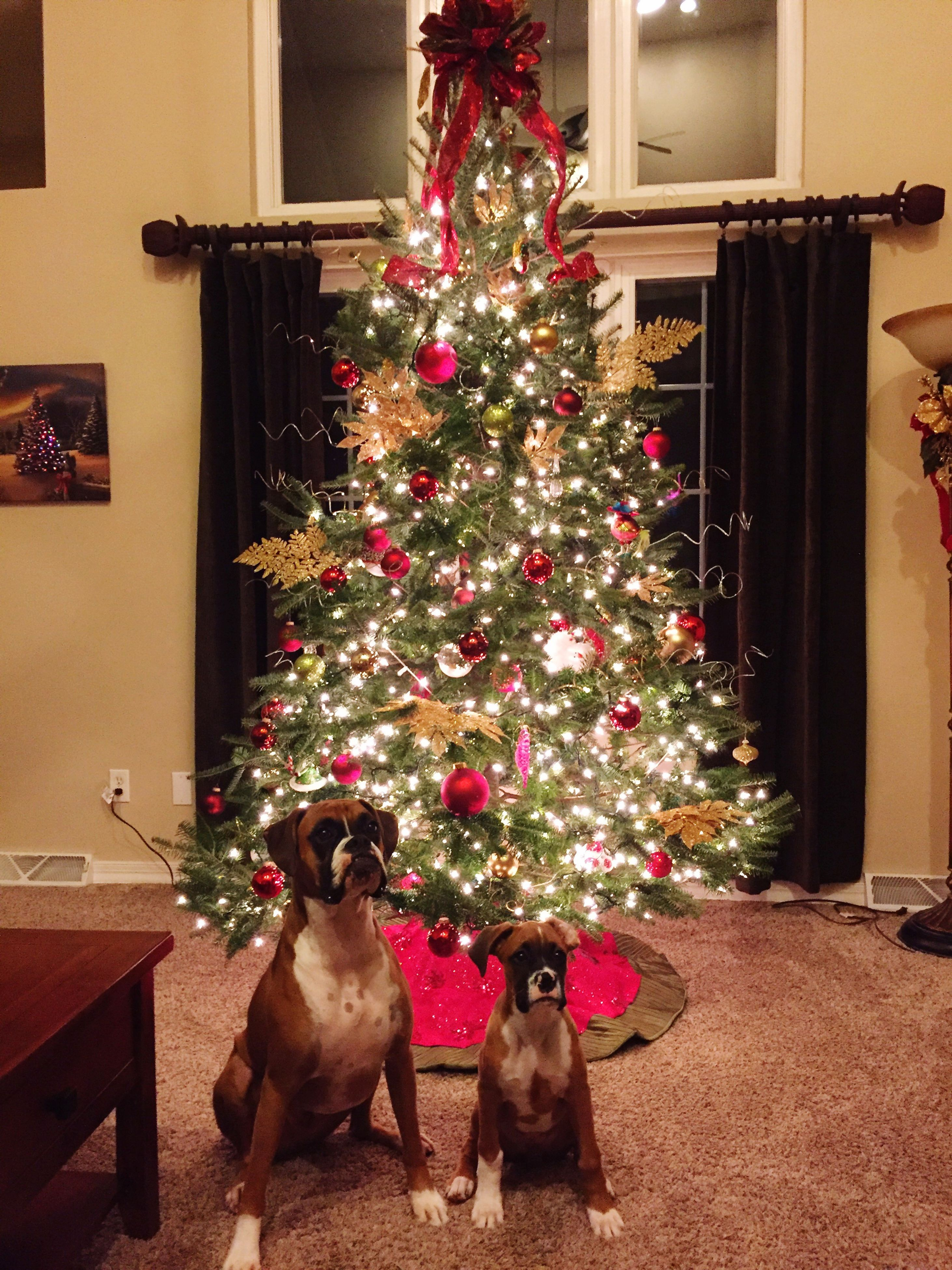 domestic animals, animal themes, flower, pets, dog, built structure, architecture, mammal, one animal, christmas, building exterior, decoration, indoors, house, christmas tree, celebration, no people, tradition, multi colored, window