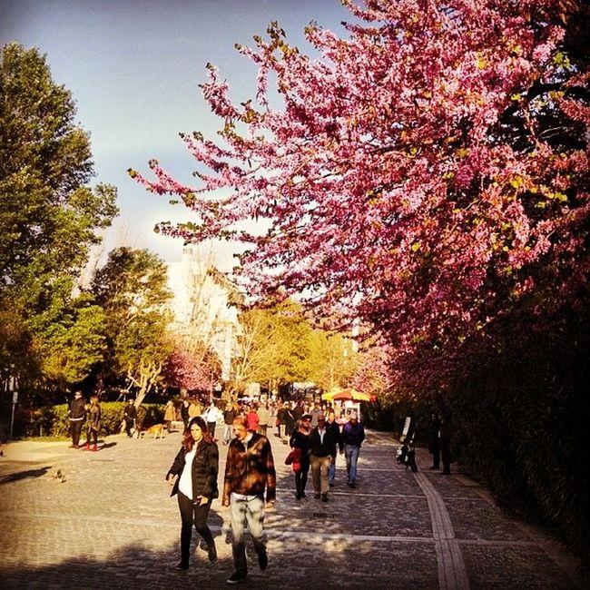 Street scene from Athens Greece Beautifulday Amazingcity Insta_europe Ig_greece Acropolis