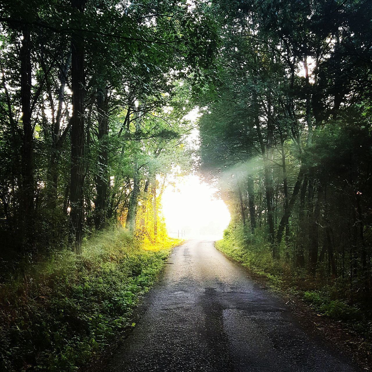 tree, the way forward, nature, forest, road, beauty in nature, tranquil scene, tranquility, no people, outdoors, growth, scenics, day