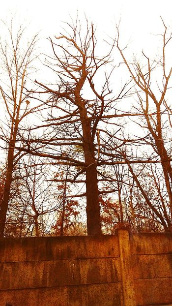 leaves in the winter?? Nature Outdoors Outdoor Photography Winter Barren Bare Tree Instadaily Instalike Nosnow Globalwarming