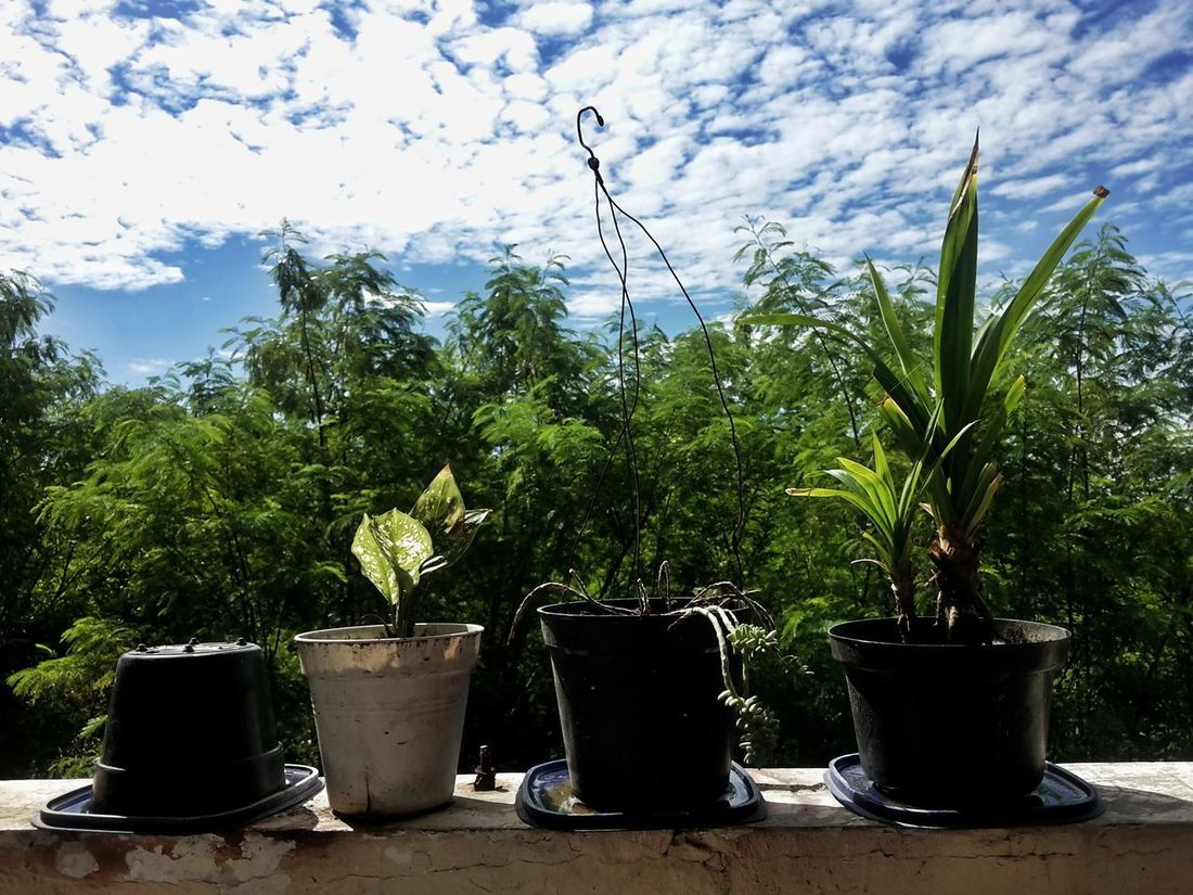 my collection Growth Tree Nature Plant No People Day Outdoors Sky Cloud - Sky Trees Front View ArtInMyLife Bali, Indonesia