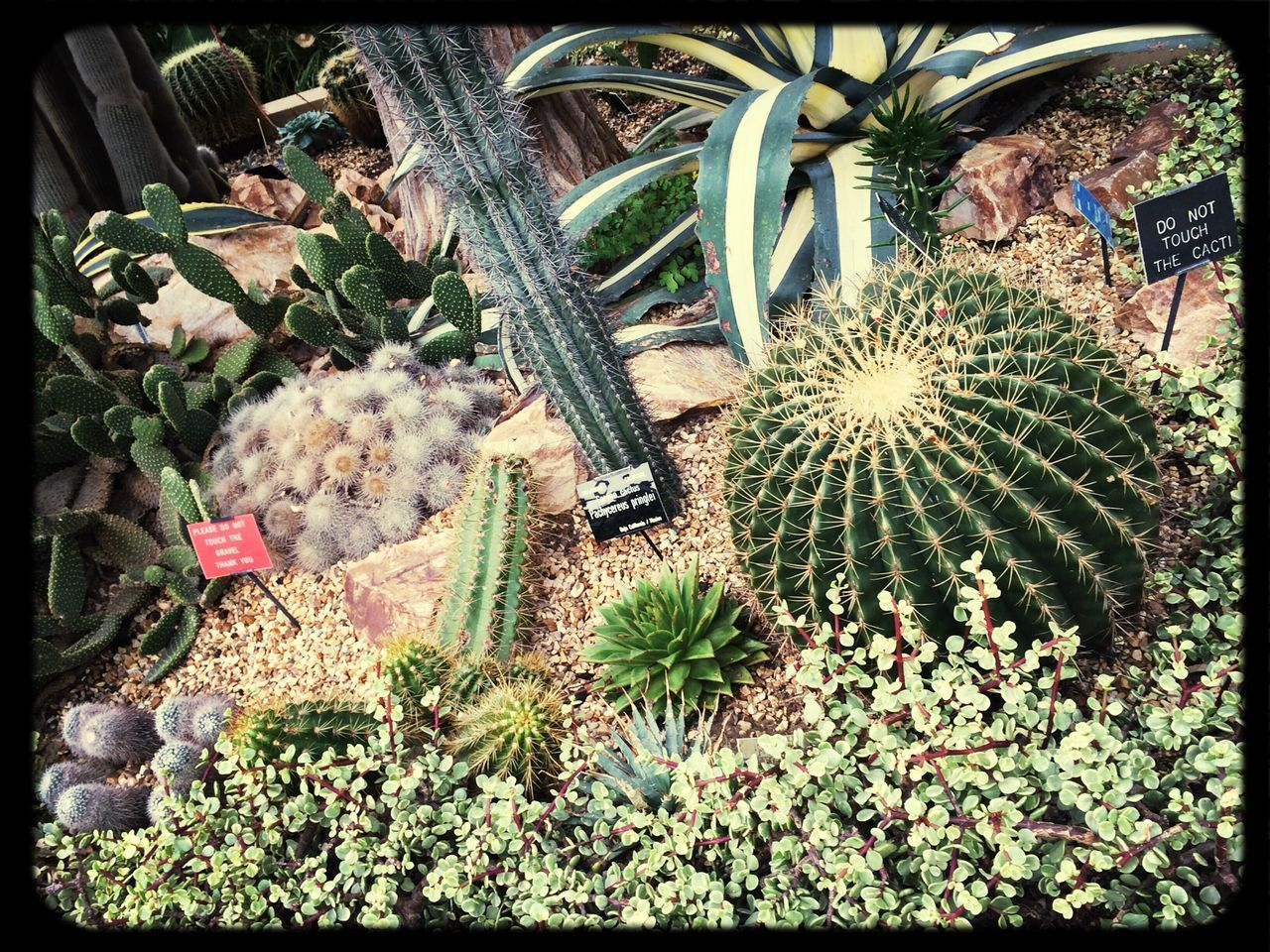 High Angle View Of Succulent Plants Growing In Park
