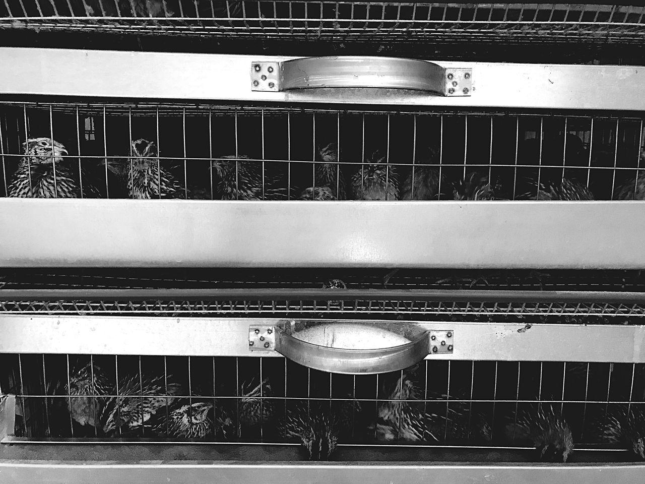 Rail Transportation Indoors  No People Transportation Day Village Village Life Black & White Photography Domestic Animals Перепелки клетка ферма деревня жестокость птицы в клетке Еда перепелиные яйца яйца Summer