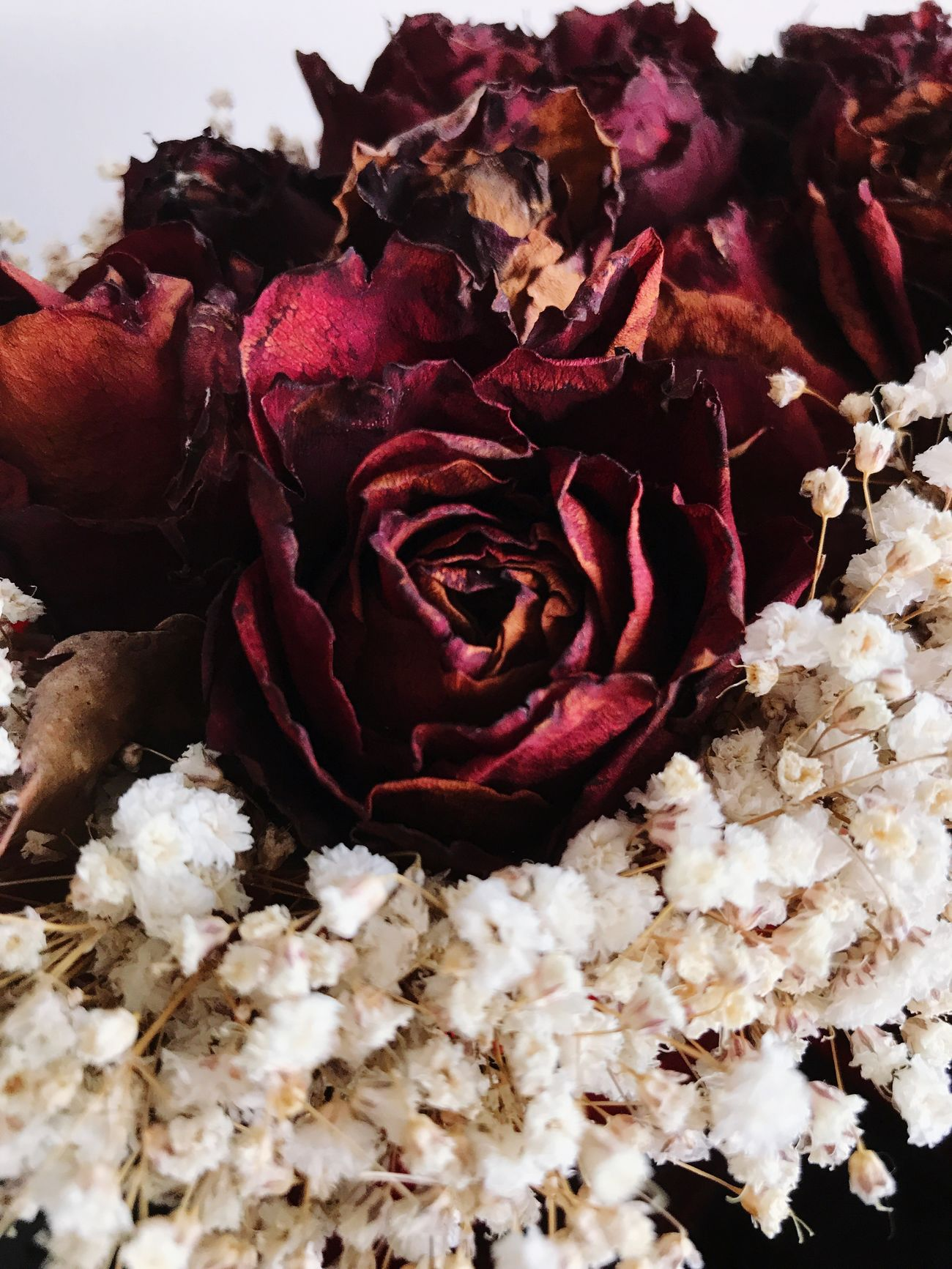 The flowers are dead, but they are still beautiful.🥀 Flower Petal Fragility Flower Head Freshness Rose - Flower Beauty In Nature Nature Close-up Blossom No People Bouquet Growth Plant Indoors  Day Dead Plant DeadRoses Rose🌹