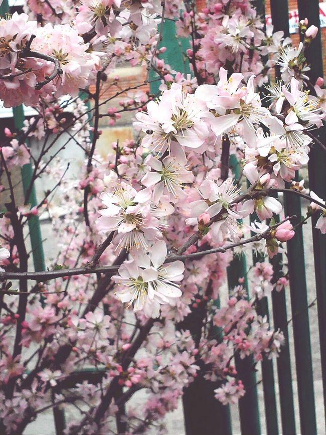 Flowertree Flower 꽃 Bloom 160518