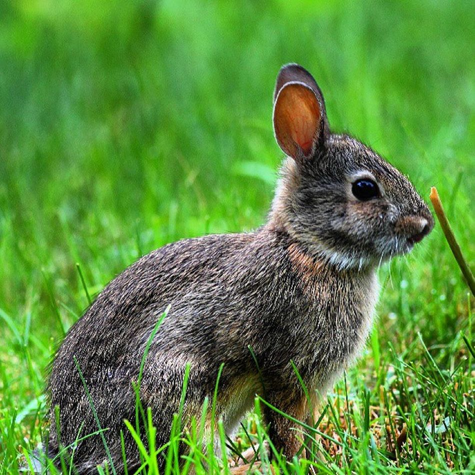 Looks like Thumper has a baby Nature_perfection Wildlife_perfection Underdogs_nature