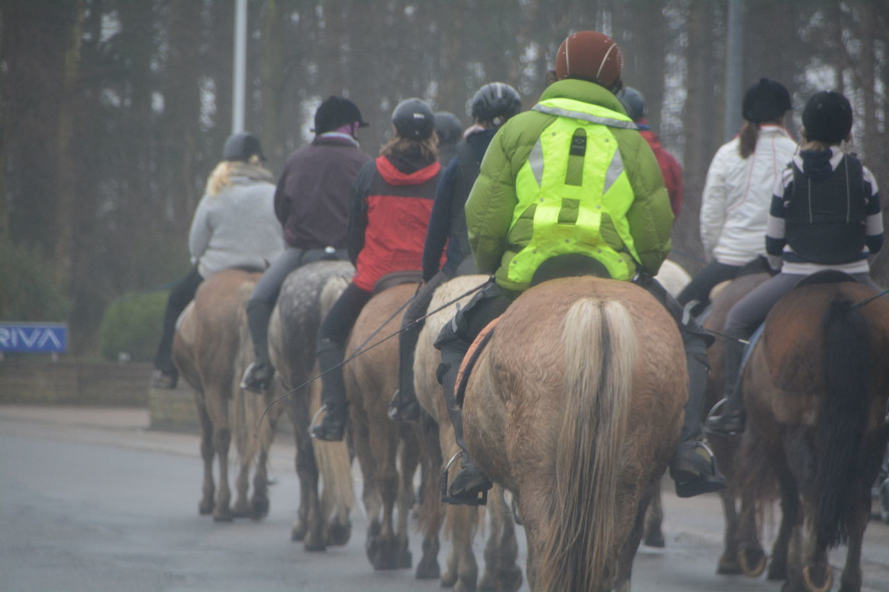 horse, real people, domestic animals, mammal, horseback riding, riding, men, horse racing, rear view, livestock, jockey, day, large group of people, sport, outdoors, competition, occupation, sports clothing, sports race, nature, adult, people
