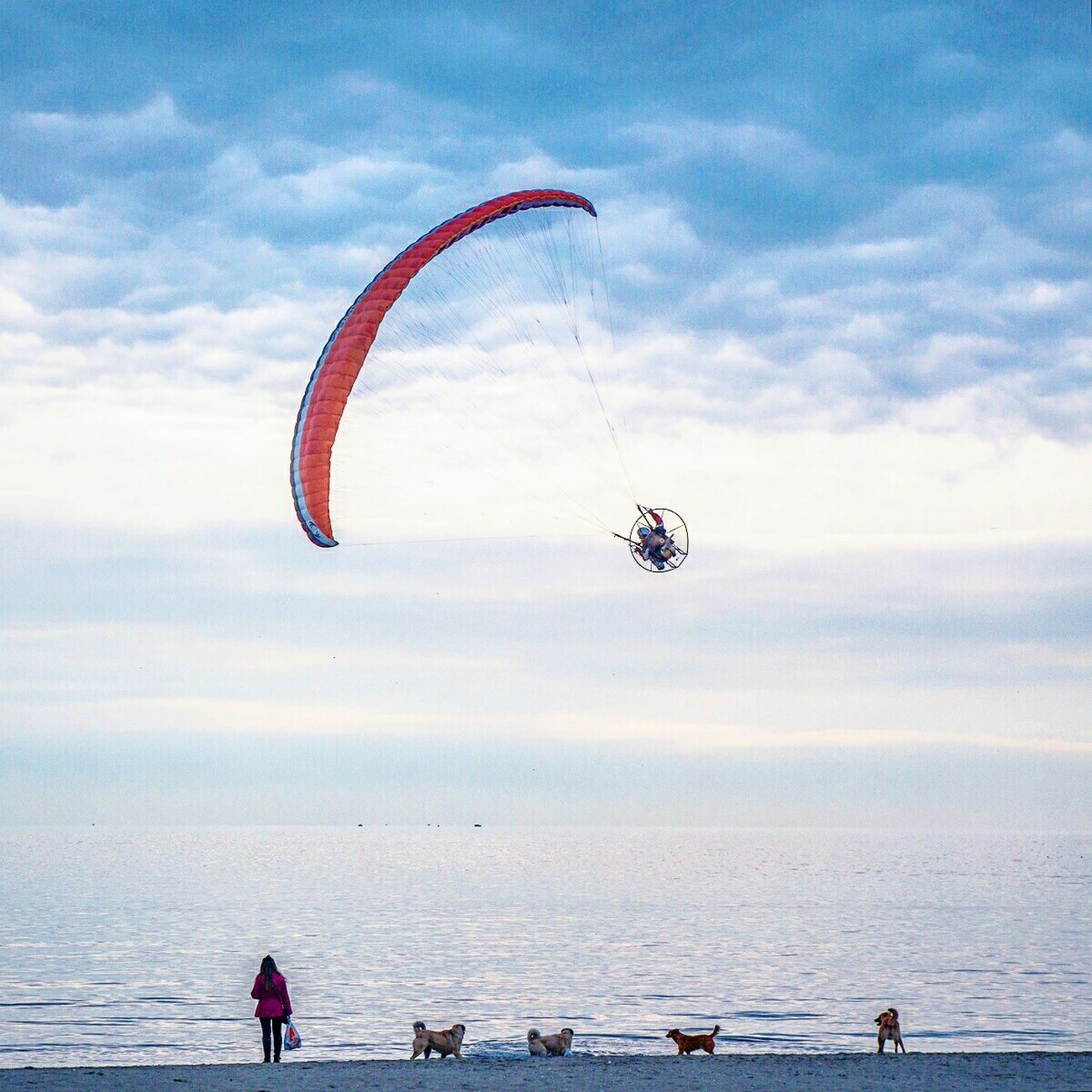 Kiteboarding Cloud - Sky Beach Outdoors Extreme Sports People Adventure Club Adventure Buddies Dog Check This Out Horizon Over Water My Year My View Peopleandplaces Istanbul Istanbulstreetphotography Outdoors Life Streetdreamsmag Finding New Frontiers Miles Away