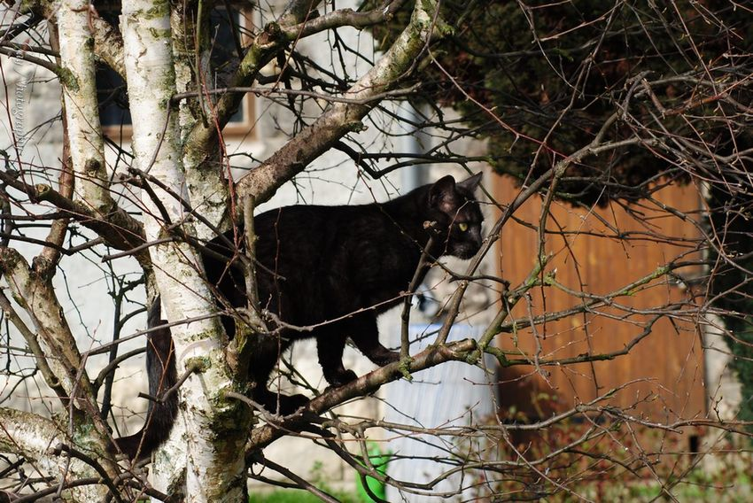 Fritz on the tree CDRE Cats Cat Cat Lovers Cat Watching Pet Animal Tree Hugging A Tree TreePorn Bare Tree Branches Climbing Climbing Trees Streamzoofamily EyeEm Nature Lover Nature EyeEm Masterclass Capture The Moment Taking Photos Black Cat Eye4photography  Nature_collection Katze Baum Lovely