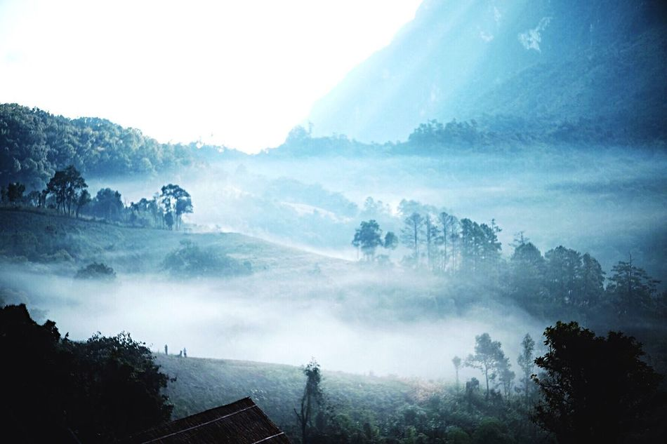 Chiang Dao Landscape Fog Nature Mountain Beauty In Nature No People Outdoors
