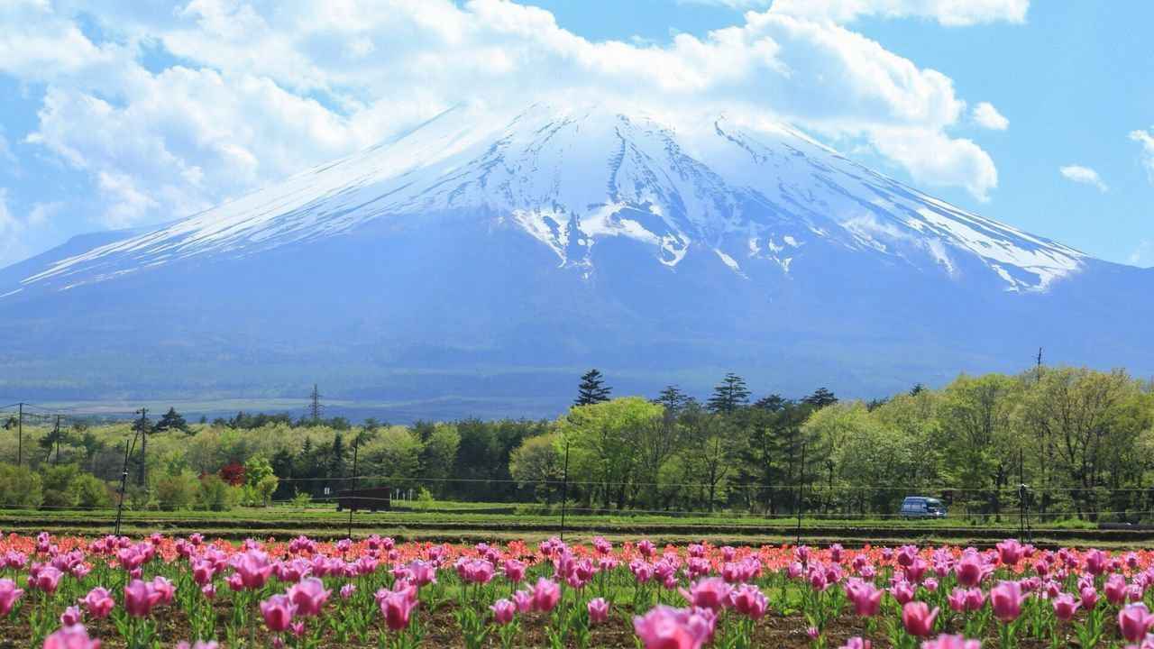 EyeEm Nature Lover Mt.Fuji Landscape_Collection Flowerporn