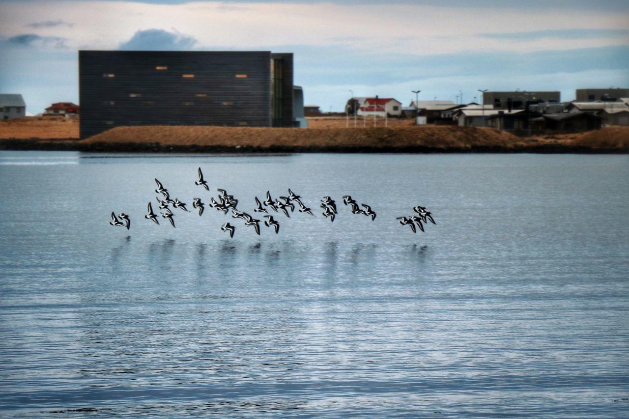 Bird City Architecture Flock Of Birds Outdoors Morning Light Njarðvik Sea Beach Nature Reflection