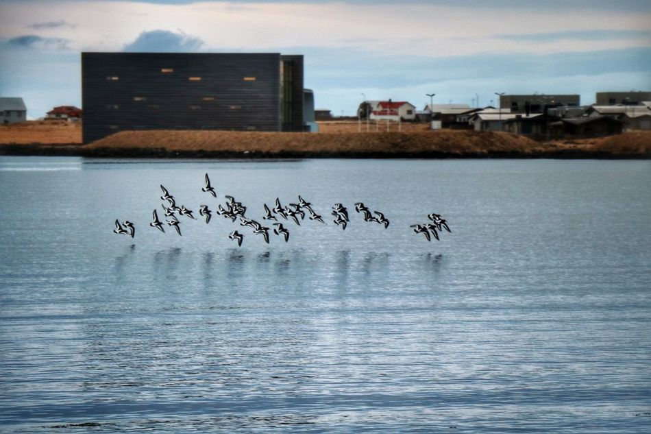 Bird City Architecture Flock Of Birds Outdoors Morning Light Njarðvik Sea Beach Nature Reflection