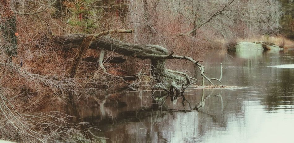 Tree Old Tree Wood River Tranquility Reflections Soft Focus Water Reflections