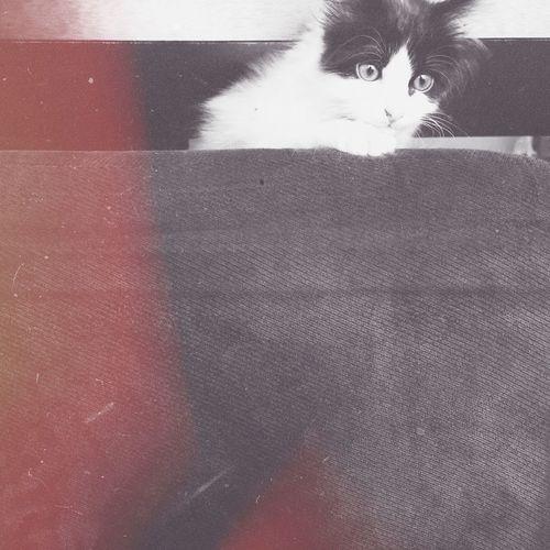 my maxim Cats Pets Vscocam Love