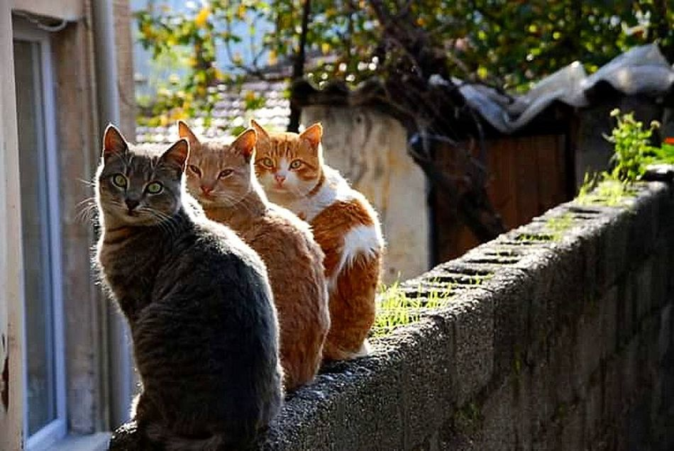 Zonguldak Cats Hello World EyeEm Best Shots Sokakfotografi Anıyakala