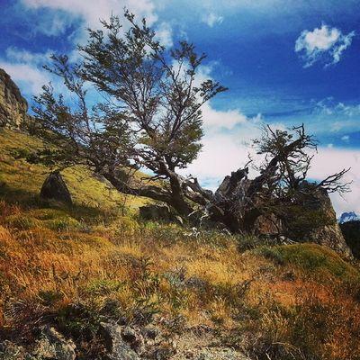 Amazing El Chalten, Patagonia, Argentina ElChalten Patagonia Argentina