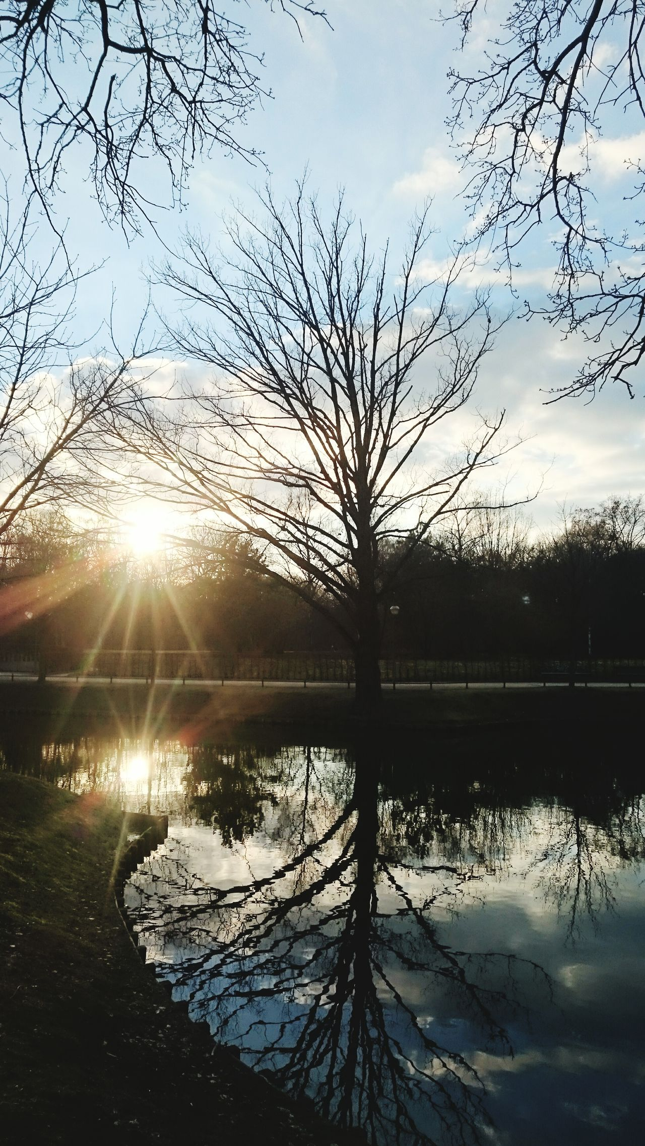 Reflection Water Lake Nature Sky Tree Sunlight Sunset Sun Outdoors No People Reflection Lake Tranquility Scenics Reed - Grass Family Day