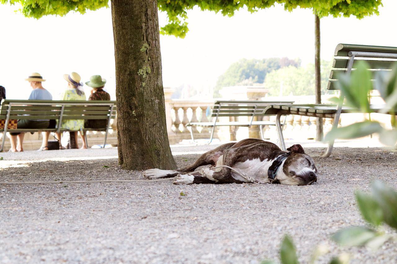 Dog Resting Under Tree In Park