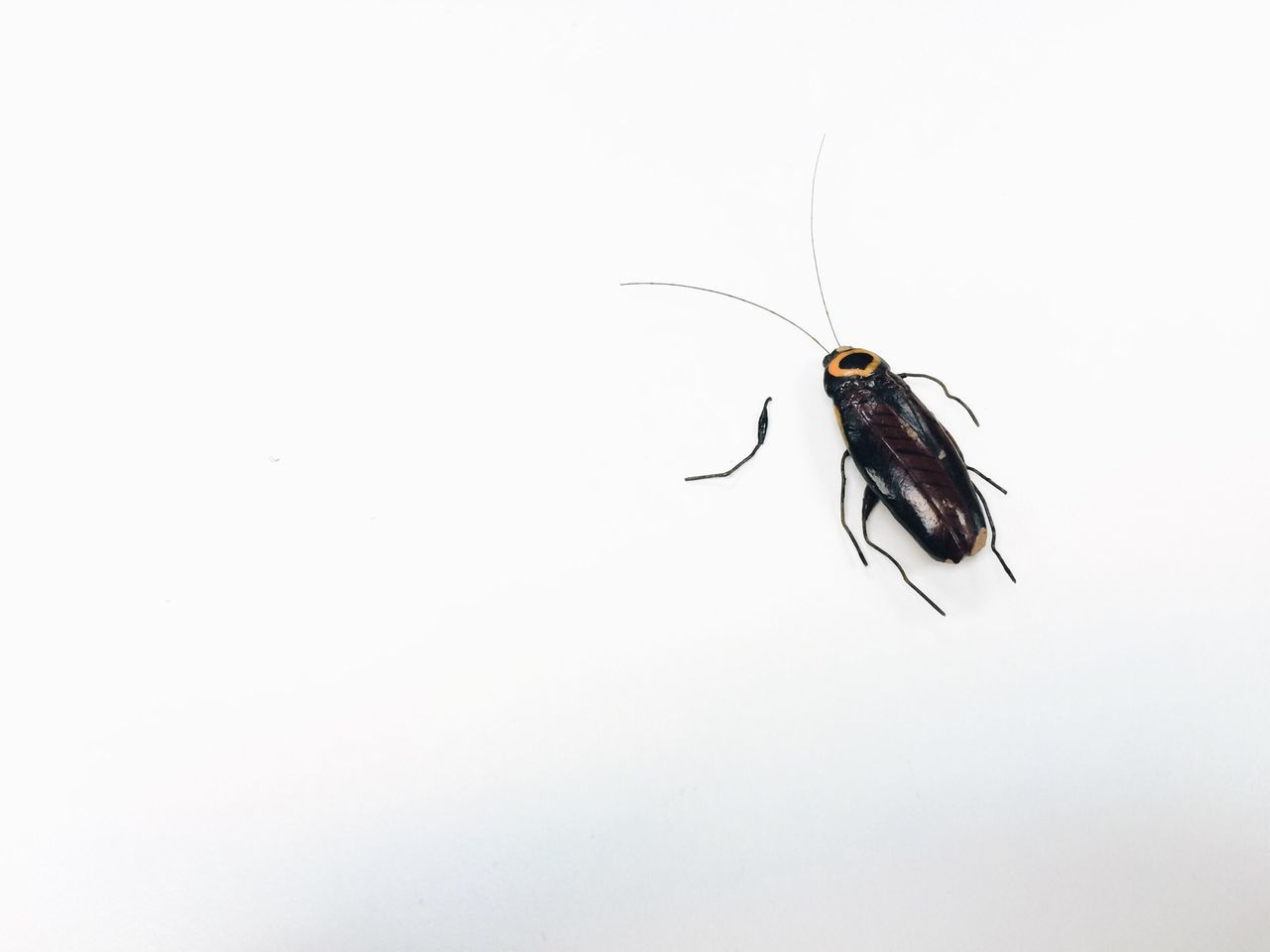 Beautiful stock photos of cockroach, Animal Themes, Animal Wildlife, Animals In The Wild, Close-Up