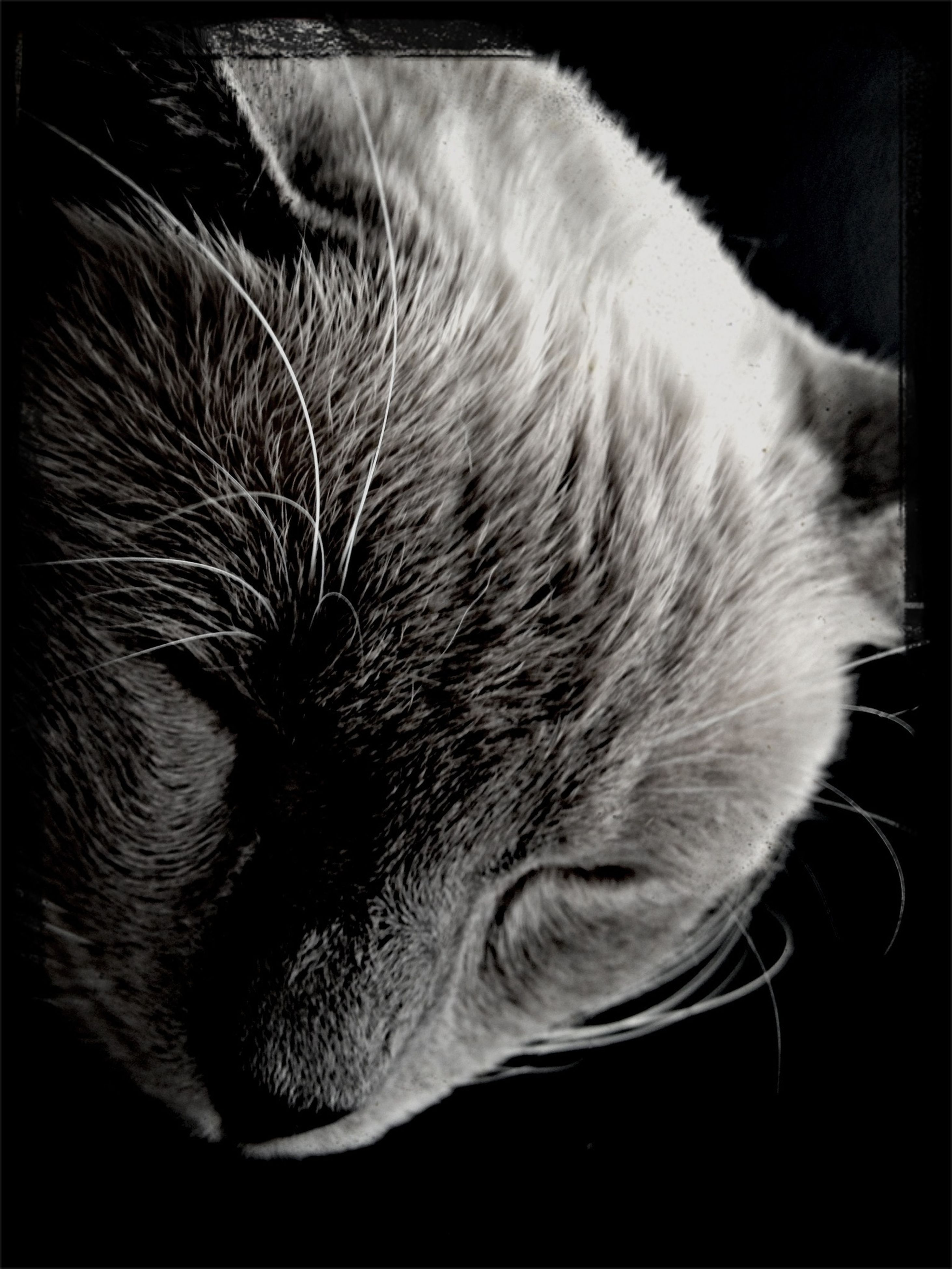 pets, domestic animals, indoors, one animal, animal themes, mammal, domestic cat, cat, close-up, relaxation, sleeping, feline, whisker, animal head, eyes closed, resting, lying down, transfer print, auto post production filter, animal body part
