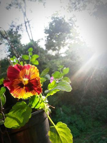 Amorperfeito Sunny Flowers,Plants & Garden