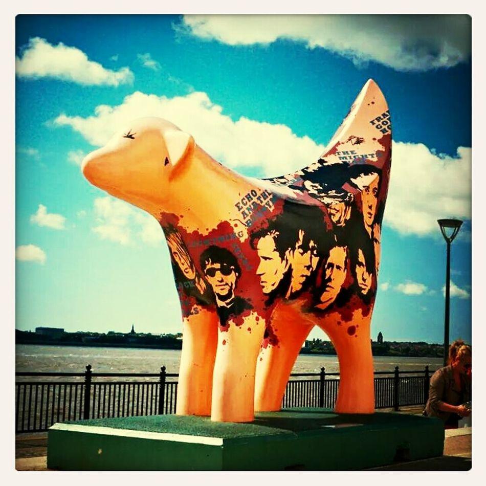 Lambanana Taking Photos Hanging Out in Liverpool