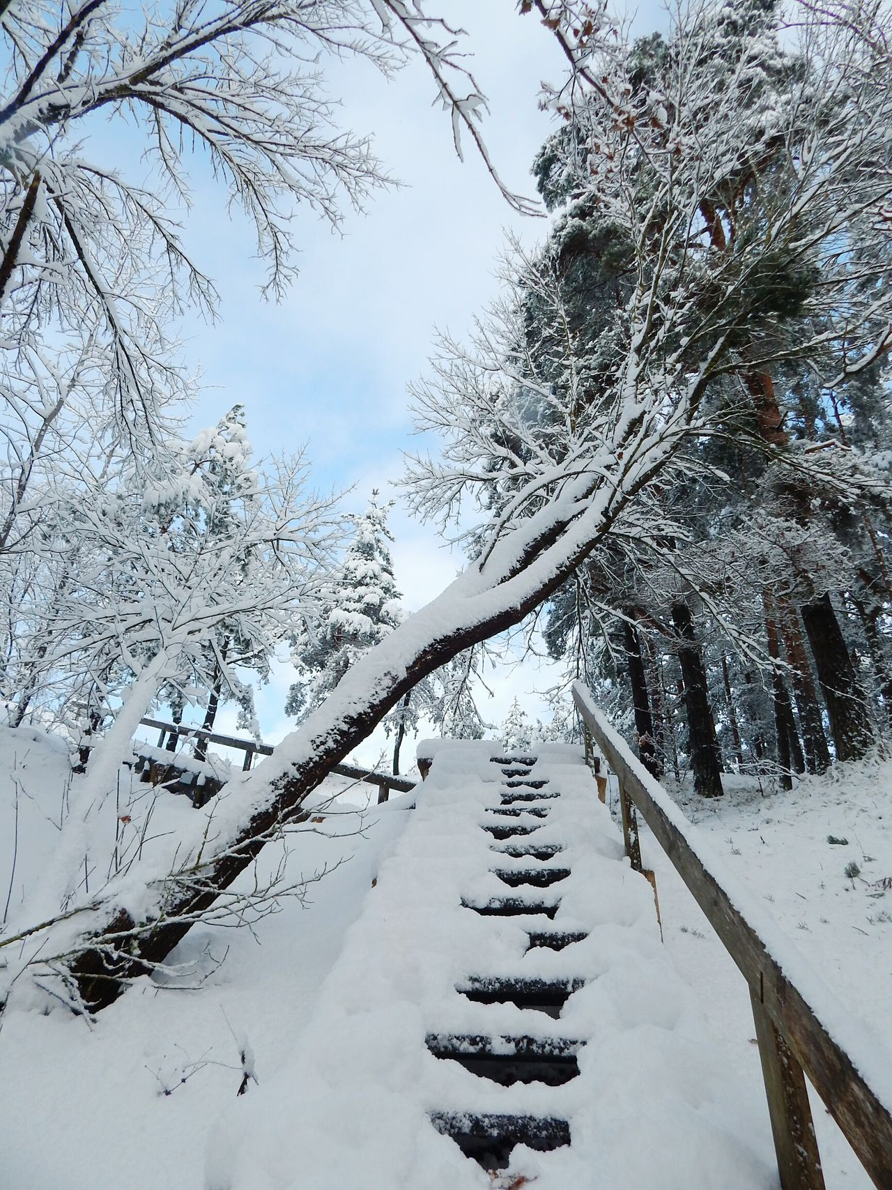 Tree Winter Cold Temperature Snow Nature Outdoors Beauty In Nature Tranquility No People Sky Day Scenics Branch Stairs Tree Beauty In Nature Riga Latvia Forest