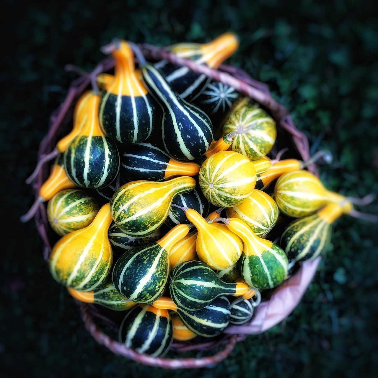 Stripes&Stripes Pumpkins Pumpkin Yellow Green Autumn Food Collection Close-up Food And Drink Group Of Objects Focus On Foreground Abundance Halloween