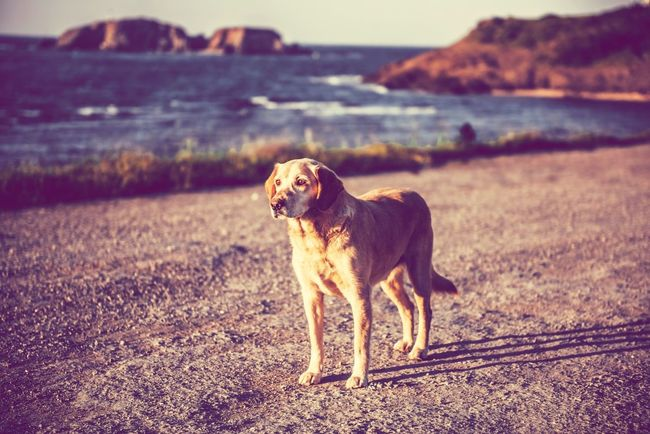 Bisgen Dog Animals Istanbul EyeEm Best Shots Enjoying Life Eye4photography  Nature_collection Seaside Köpek