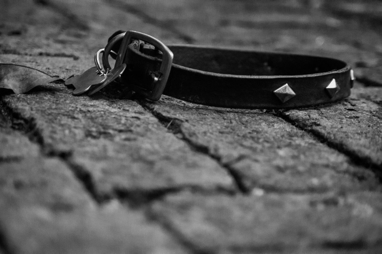 In memory of my dog and friend, Dude, who I recently lost. Brick Bricks Close-up Collar Day Dog Dog Collar No People Outdoors Studded Studded Collar