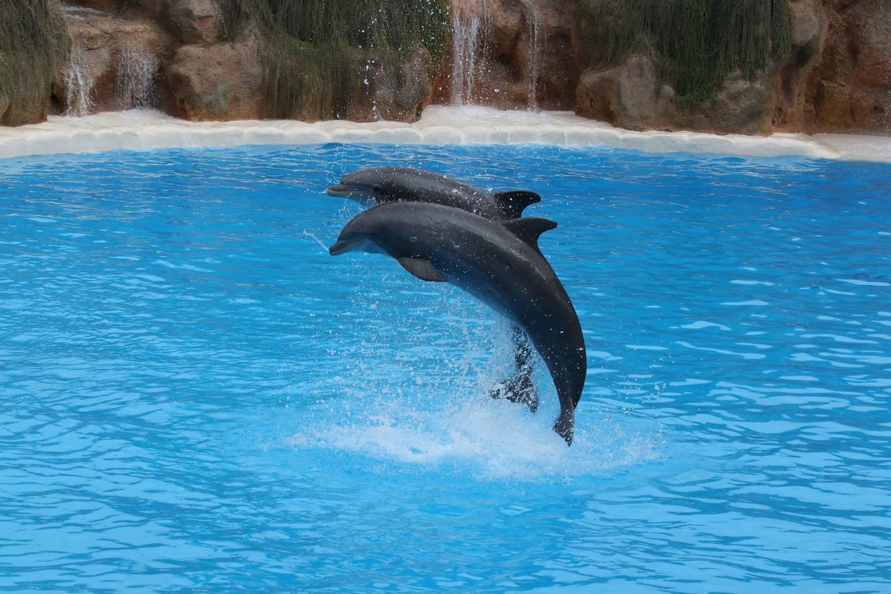 Adventure Aquatic Mammal Beauty In Nature Blue Day Delfin Delfine Dolphin Dolphin Watching  Dolphinarium Dolphins DolphinShow Freedom Jumping Mid-air Motion Nature No People Outdoors Rippled Two Is Better Than One Splashing Spread Wings Water Waterfront