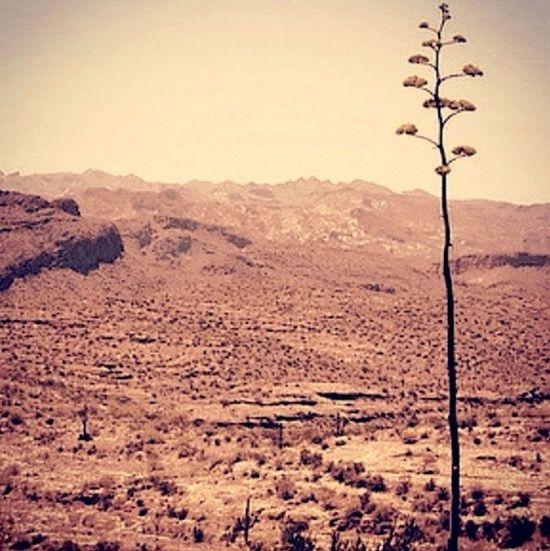 Lonely desert plant Arizona Desert Nature Desert Beauty