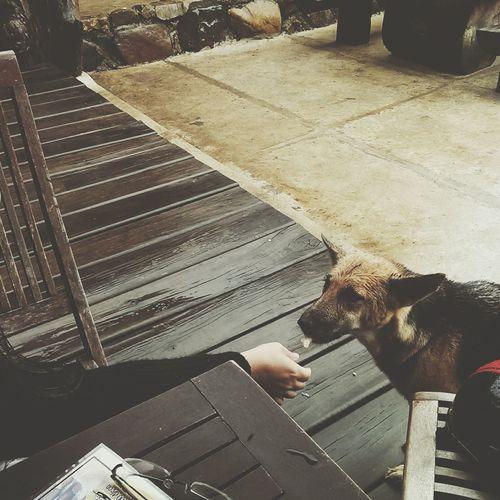 I LOVE DOG Animal Shot Beautiful Moment