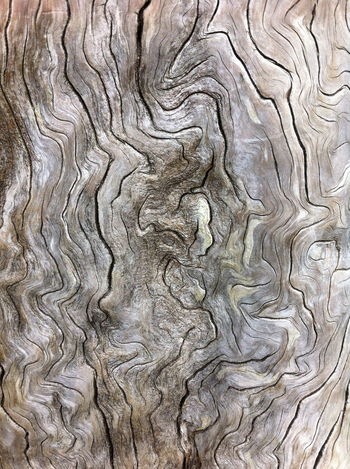 Backgrounds Creativity Design Full Frame No Barking Outdoors Pattern Patterned Textured  Weathered Tree Stump Weathered Wood Wood