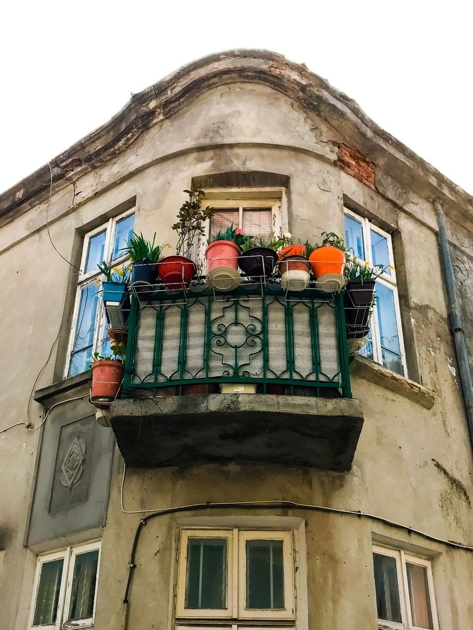 Low Angle View Architecture Window Building Exterior Built Structure House Window Box Balcony No People Flower Day Outdoors