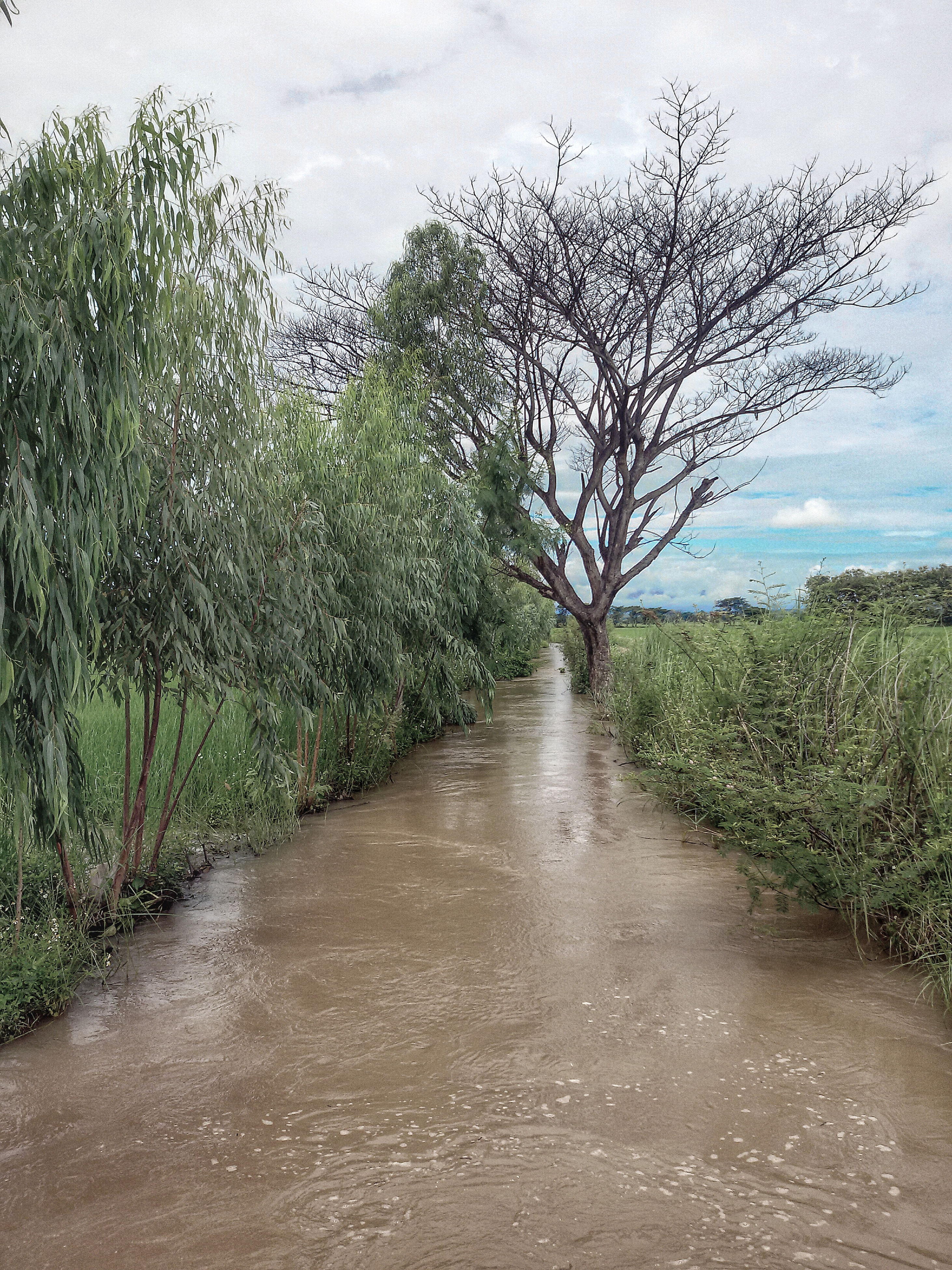 tree, water, tranquility, the way forward, tranquil scene, sky, bare tree, nature, grass, scenics, diminishing perspective, stream, beauty in nature, dirt road, branch, landscape, river, growth, day, vanishing point
