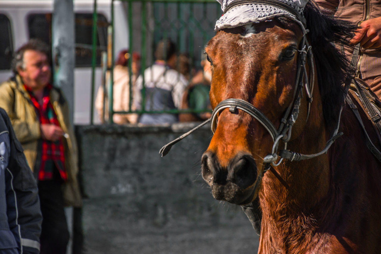 Bridle Brown Close-up Day Domestic Animals Herbivorous Horse Livestock Mammal Men One Animal One Person Outdoors Real People Working Animal