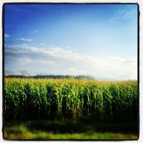 Bekaa Fields Lebanon