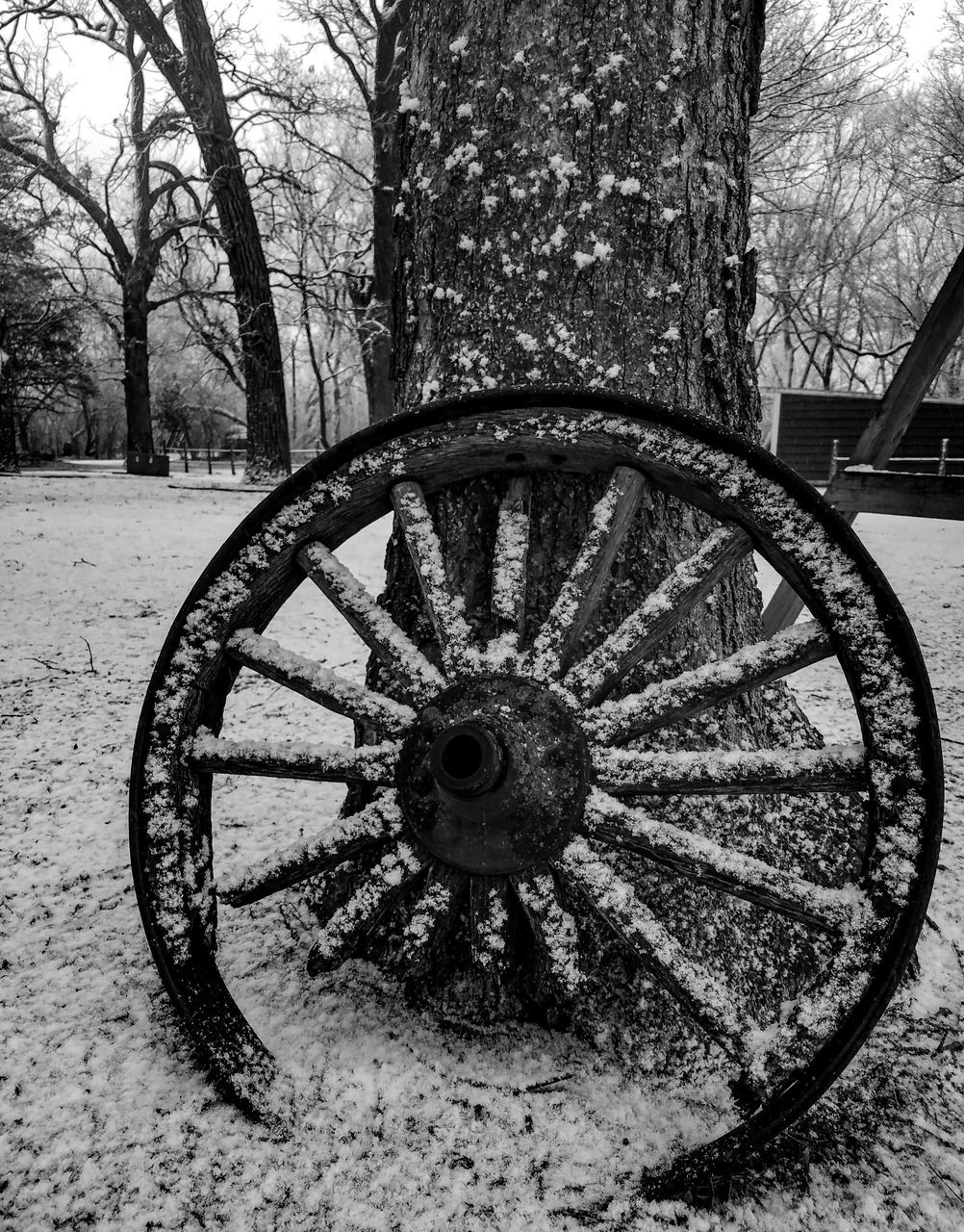 tree, bare tree, tree trunk, snow, winter, cold temperature, outdoors, day, no people, wagon wheel, branch, wheel, nature, old-fashioned, beauty in nature, close-up