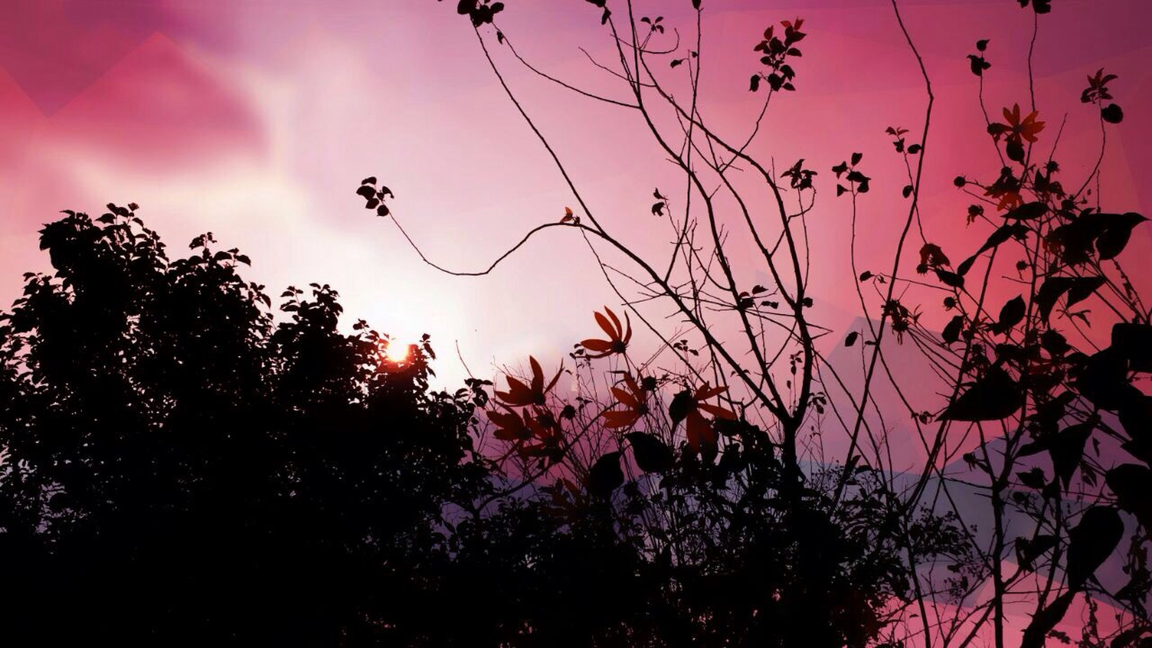 tree, sunset, sky, silhouette, branch, low angle view, beauty in nature, nature, growth, orange color, cloud - sky, red, tranquility, scenics, dusk, outdoors, tranquil scene, no people, idyllic, pink color