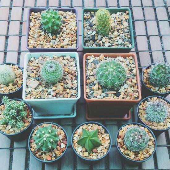 Cactus I Love Cactus Cactusclub EyeEm Cactus Cactusland. Inspiration Thailand Vsocam Cactus Series <3 Cactus