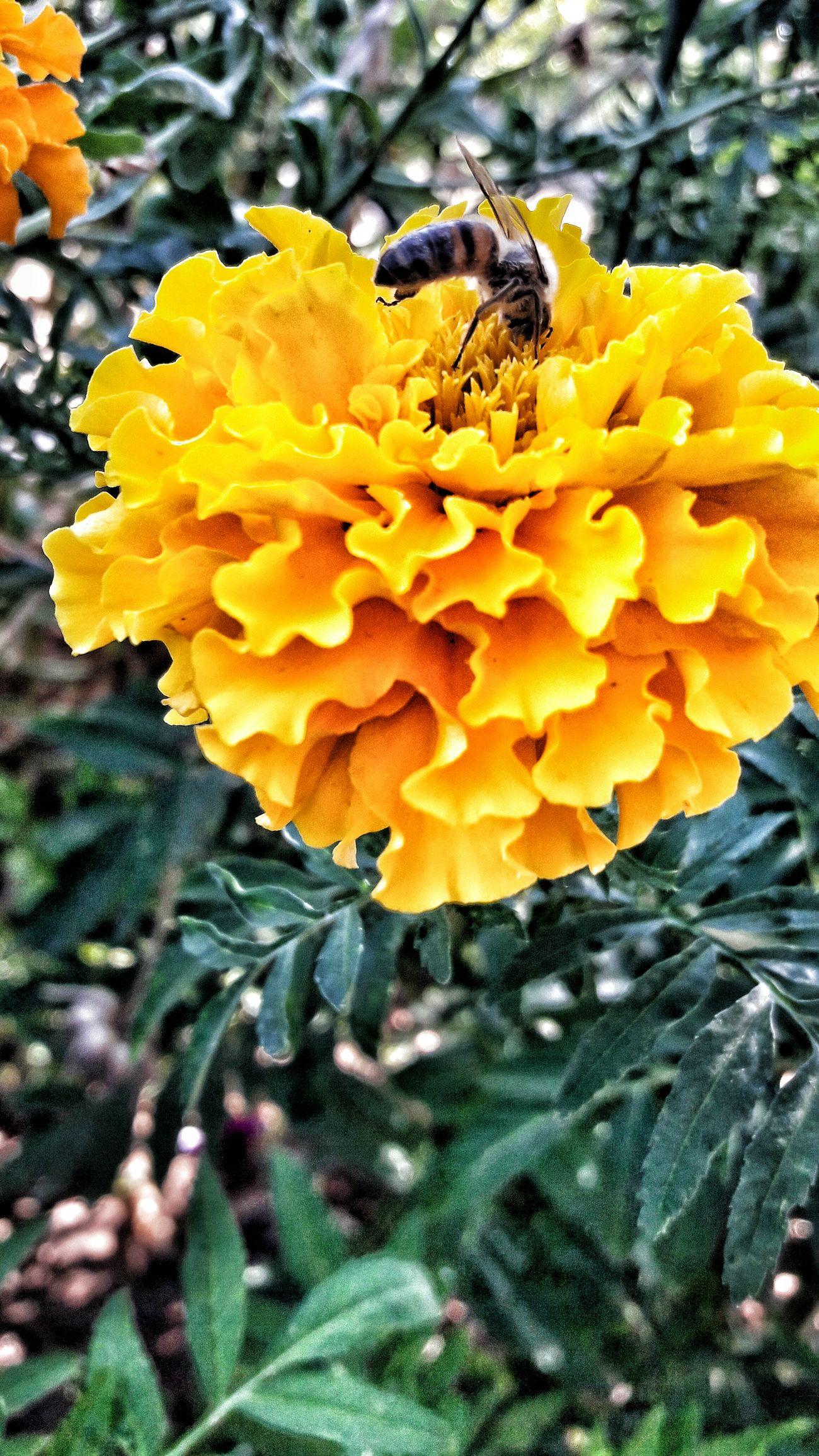 Wasp Wasps🐝 Internal Flower Photo Photography EyeEm Gallery Life Pollen Honey