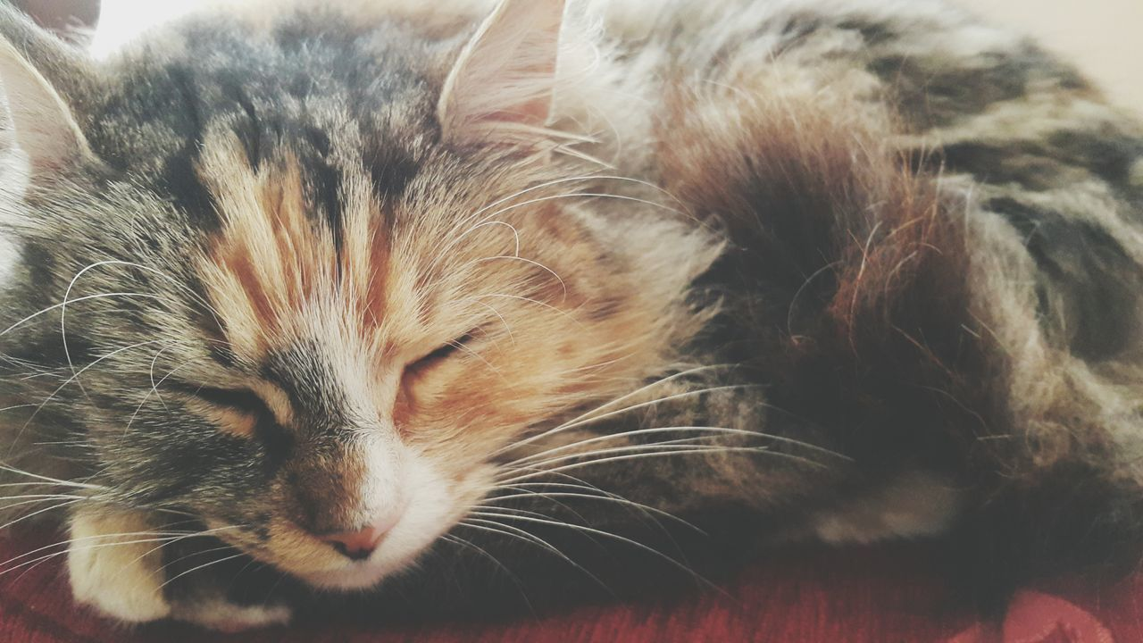 Cat Cat Lovers Sleeping Cat Kedi Kedicik Uyuyan Uyuyor Animal Animal Photography Hayvan Hayvanseverler First Eyeem Photo