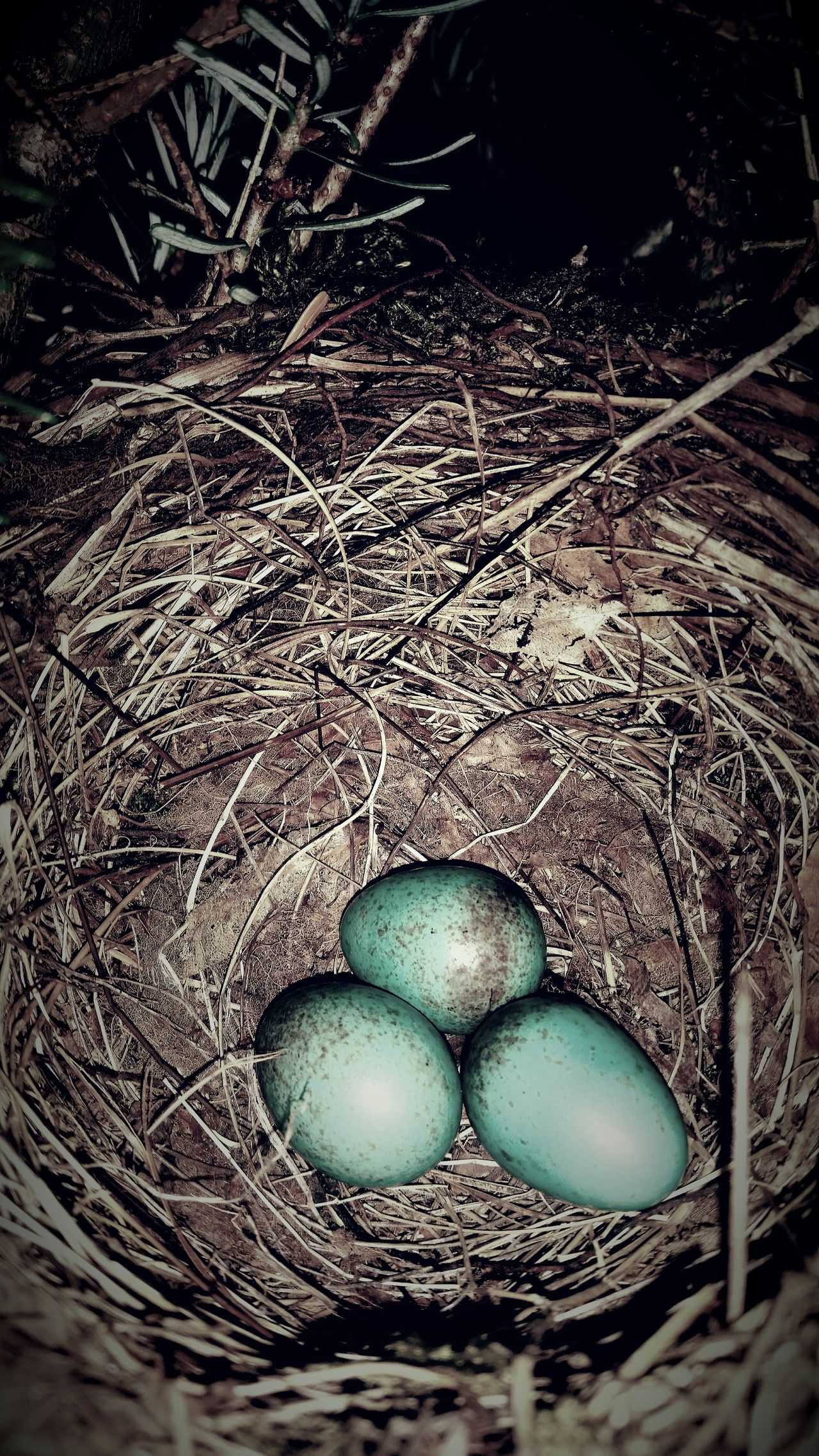 No People Night Close-up Outdoors Eier Eggs Amsel
