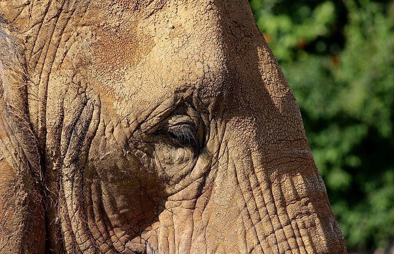 Beautiful stock photos of elephant, NULL